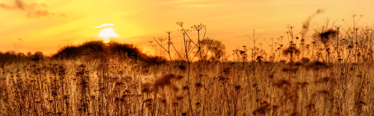 Herbstwiese im Sonnenuntergang