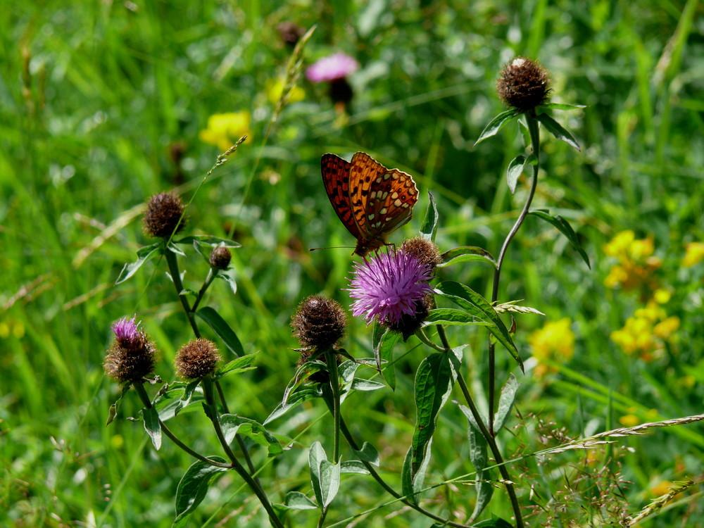 Herbstwiese mit Schmetterling