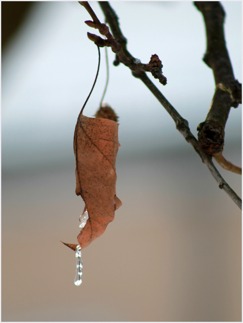 Herbst/Winter