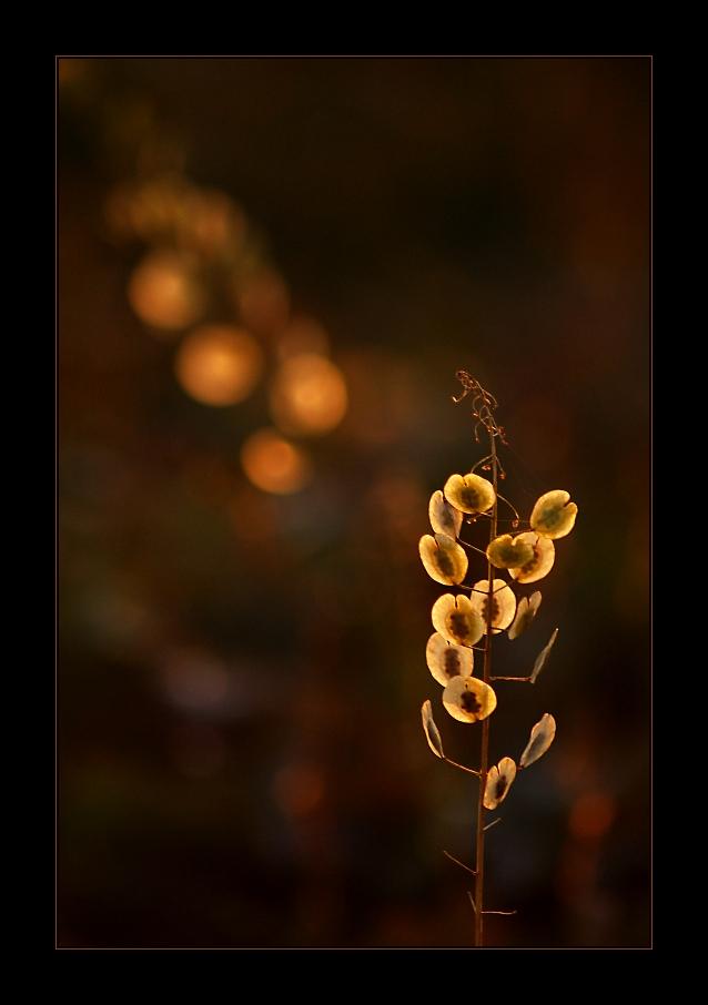 Herbstwinter - 2