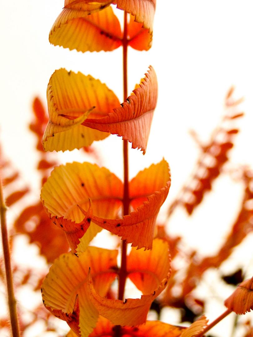 Herbstzauber.