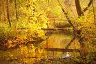 Herbstzauber an der Aitrach