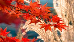 Herbstzauber