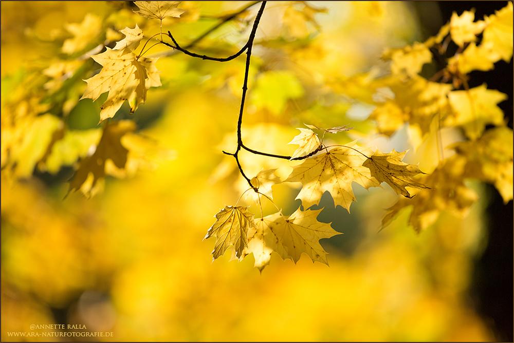Herbstzauber - Goldener Oktober