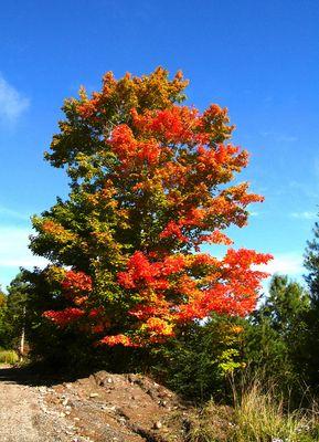 Herbstzauber im Revier