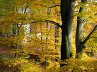 Herbstzauberwald