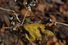 Herbstzeichen II