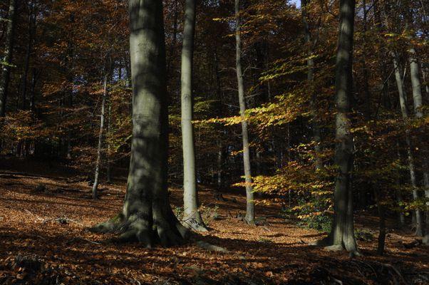 Herbstzeichen IV