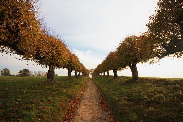 Herbstzeit .......