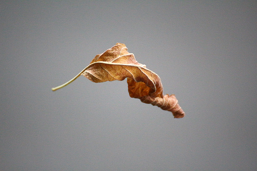 Herbstzeit...