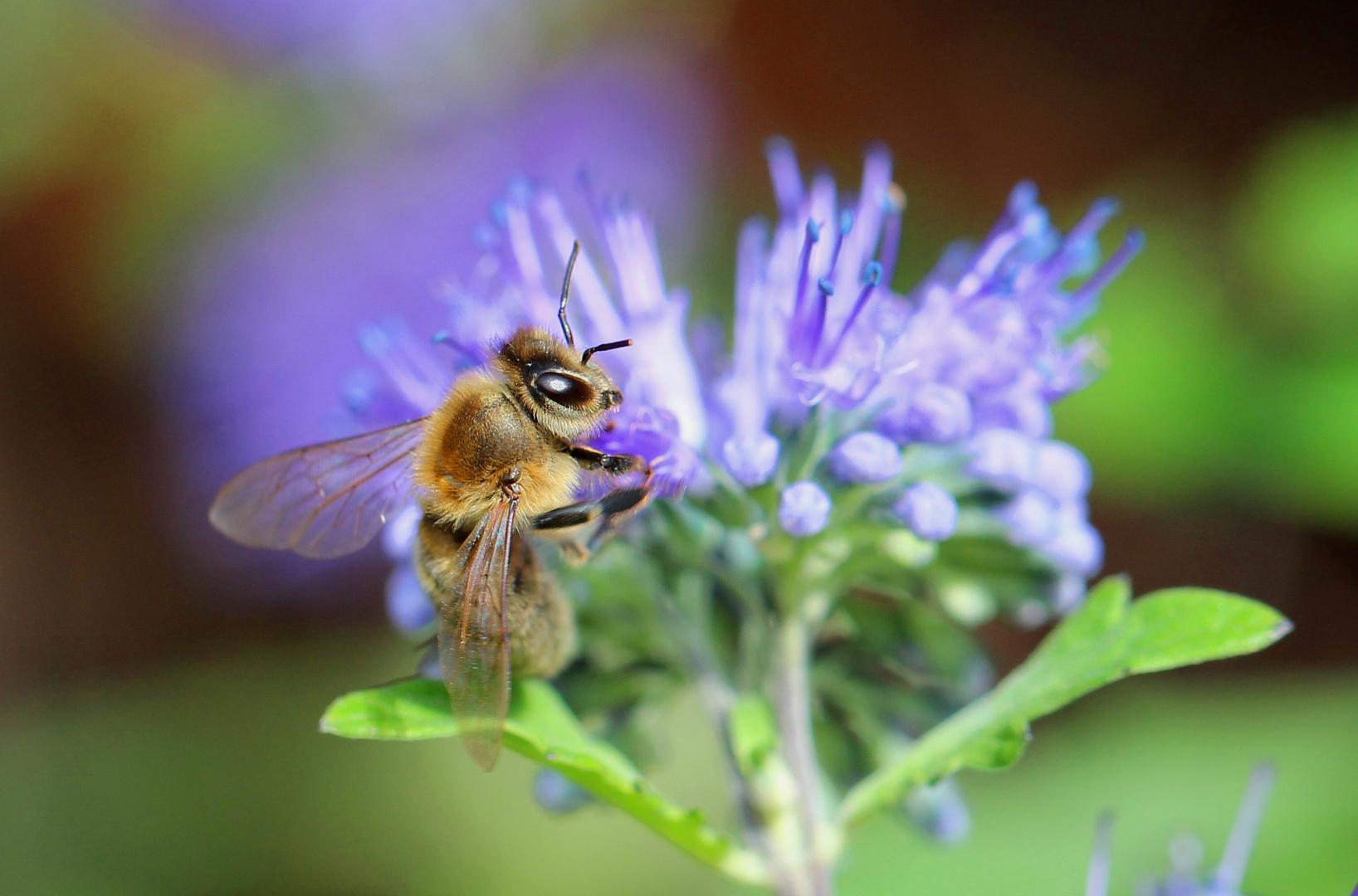 Herbstzeit-Biene:-)