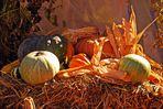 Herbstzeit - Erntezeit - Kürbiszeit
