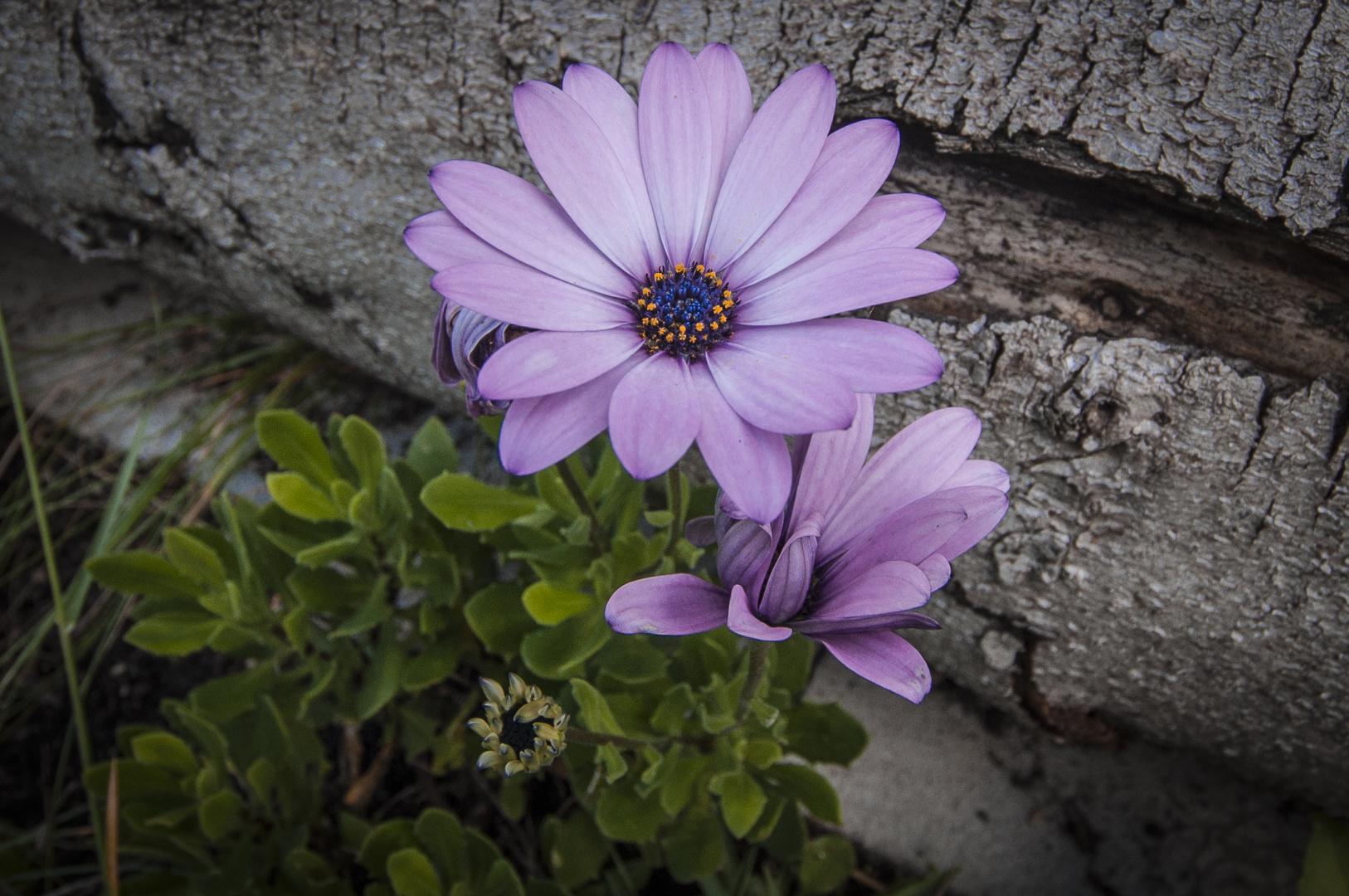 Herbstzeit im Garten 2