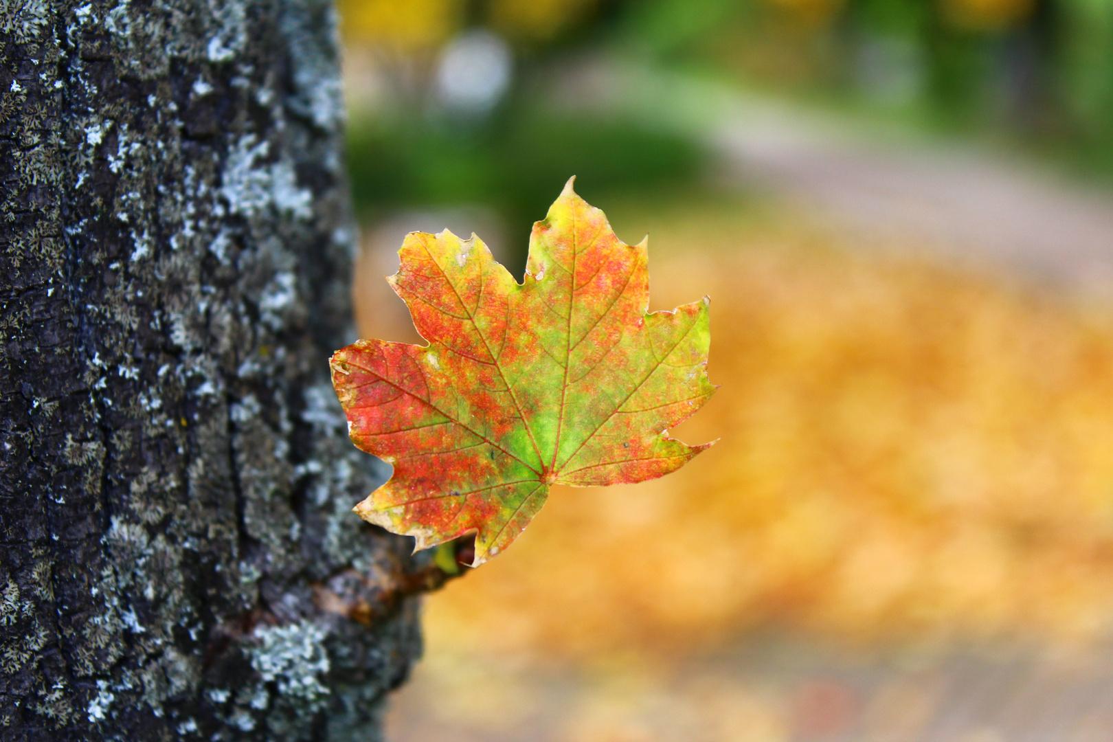 Herbstzeit in einem Blatt