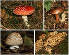 Herbstzeit ist Pilzzeit