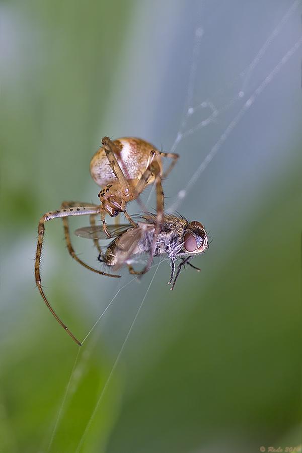 Herbstzeit ist Spinnenzeit....