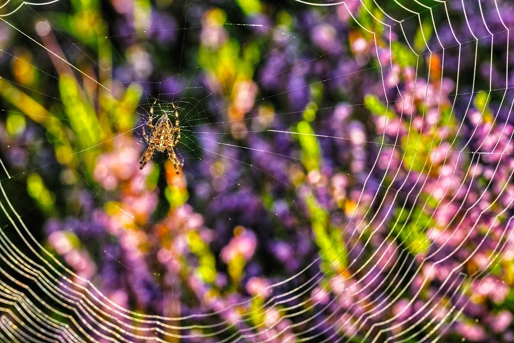 Herbstzeit ist Spinnenzeit