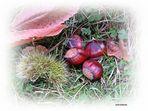Herbstzeit - Maronenzeit
