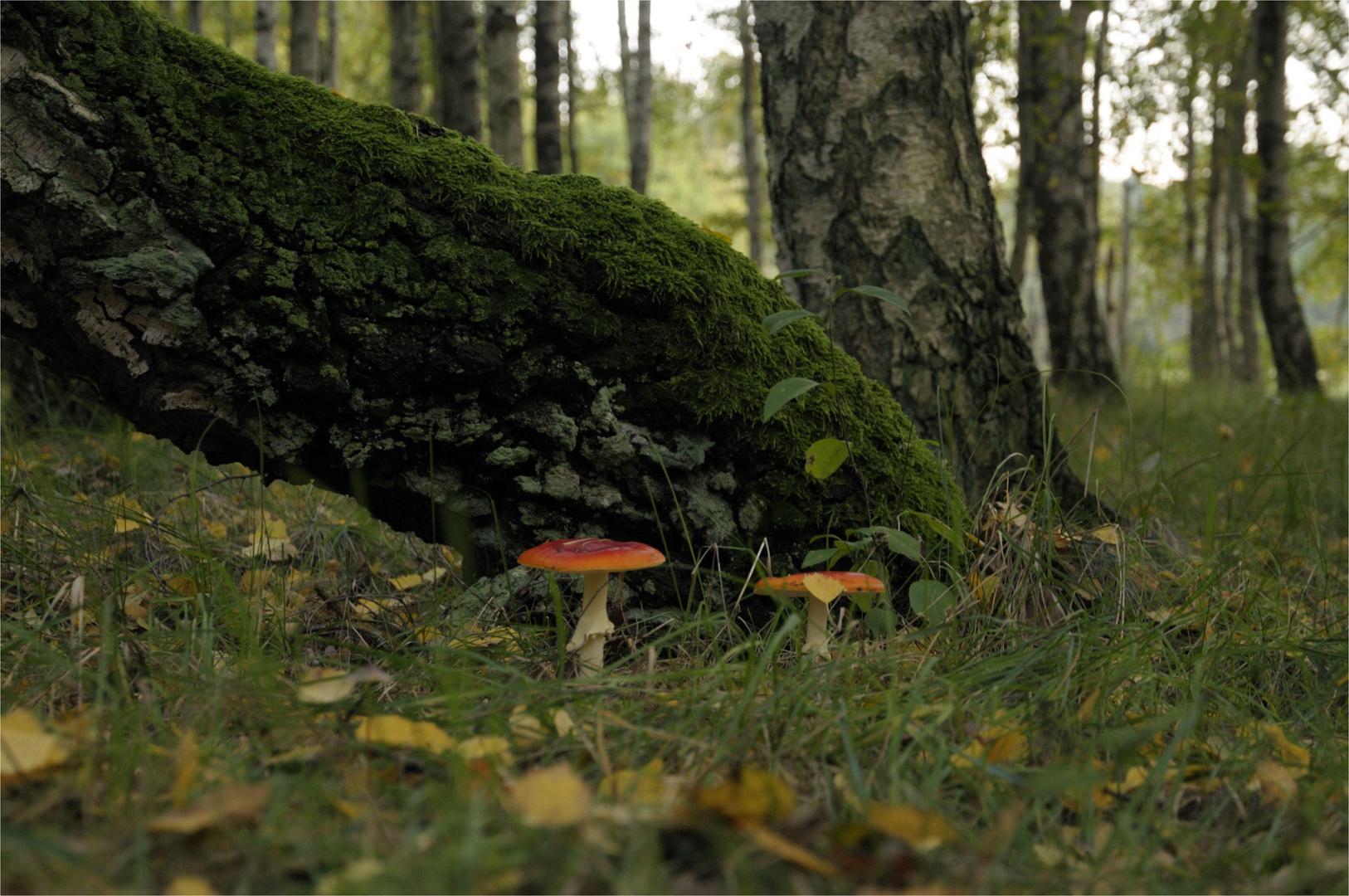 Herbstzeit-Pilzzeit