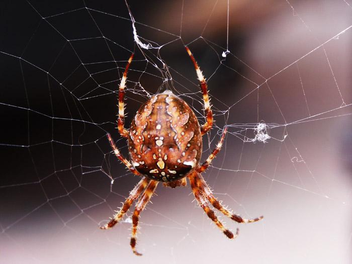 Herbstzeit - Spinnenzeit