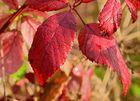 Herbstzeit_01