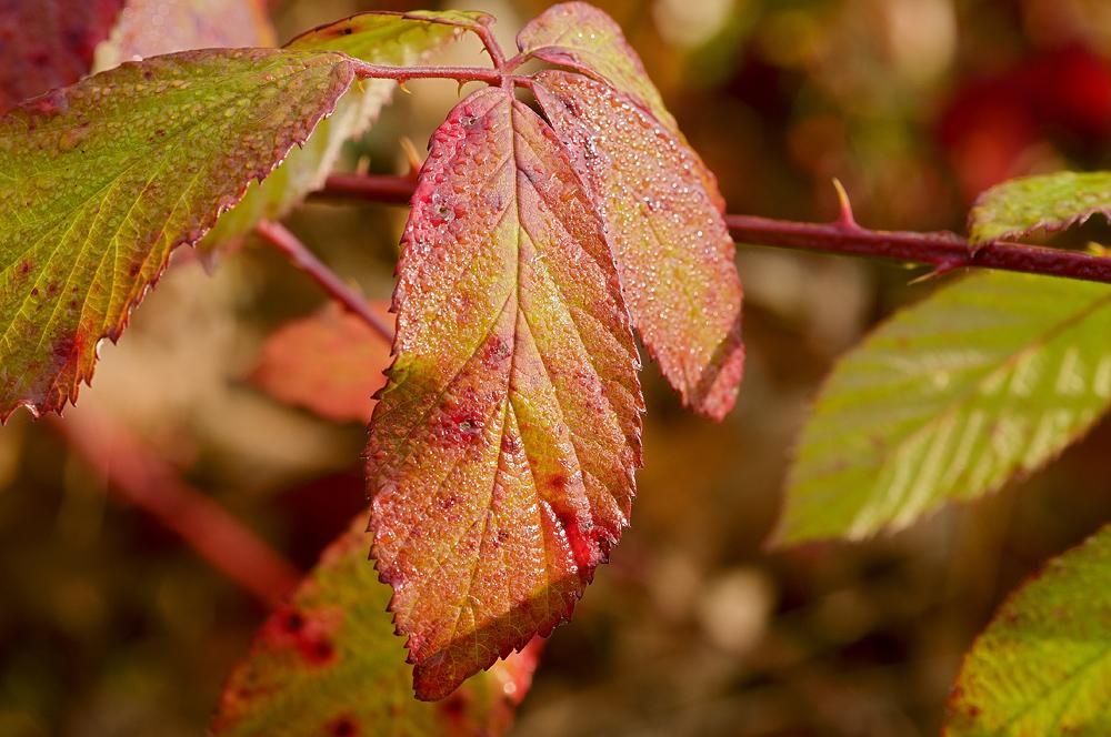 Herbstzeit_02