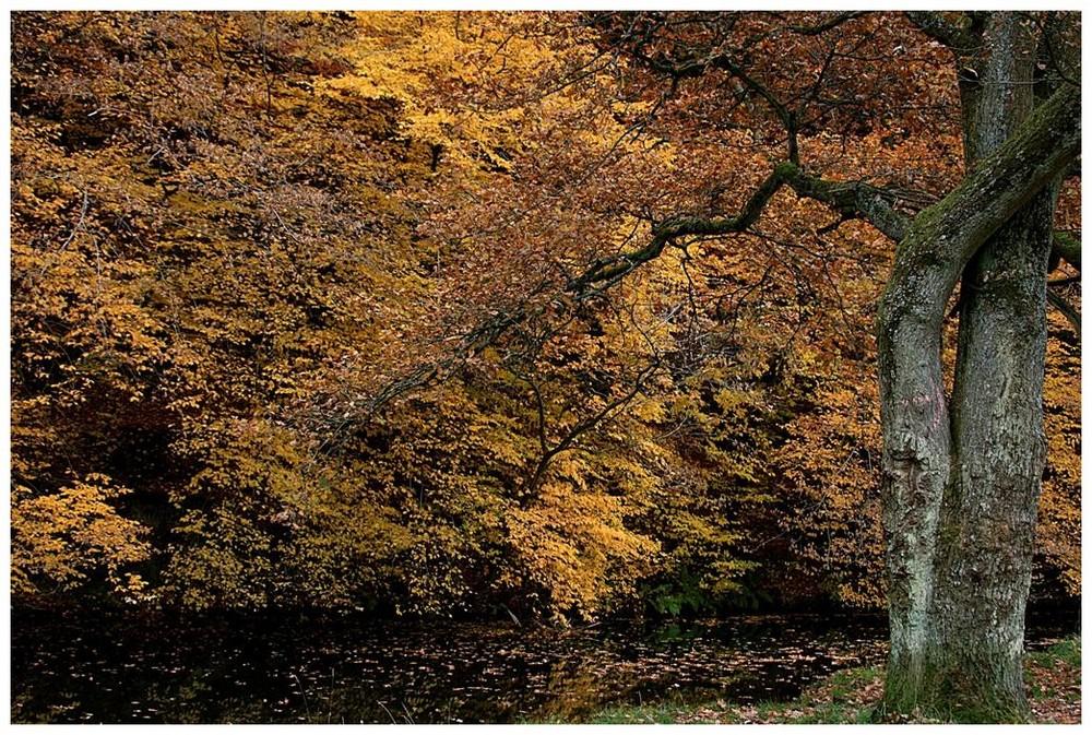 Herbstzeit.....1
