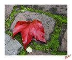 Herbstzeiten 02