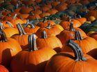 Herbstzeit...Kürbiszeit...