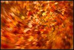 Herbstzeitlooser