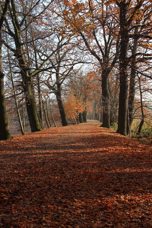 Herbstzeitlose
