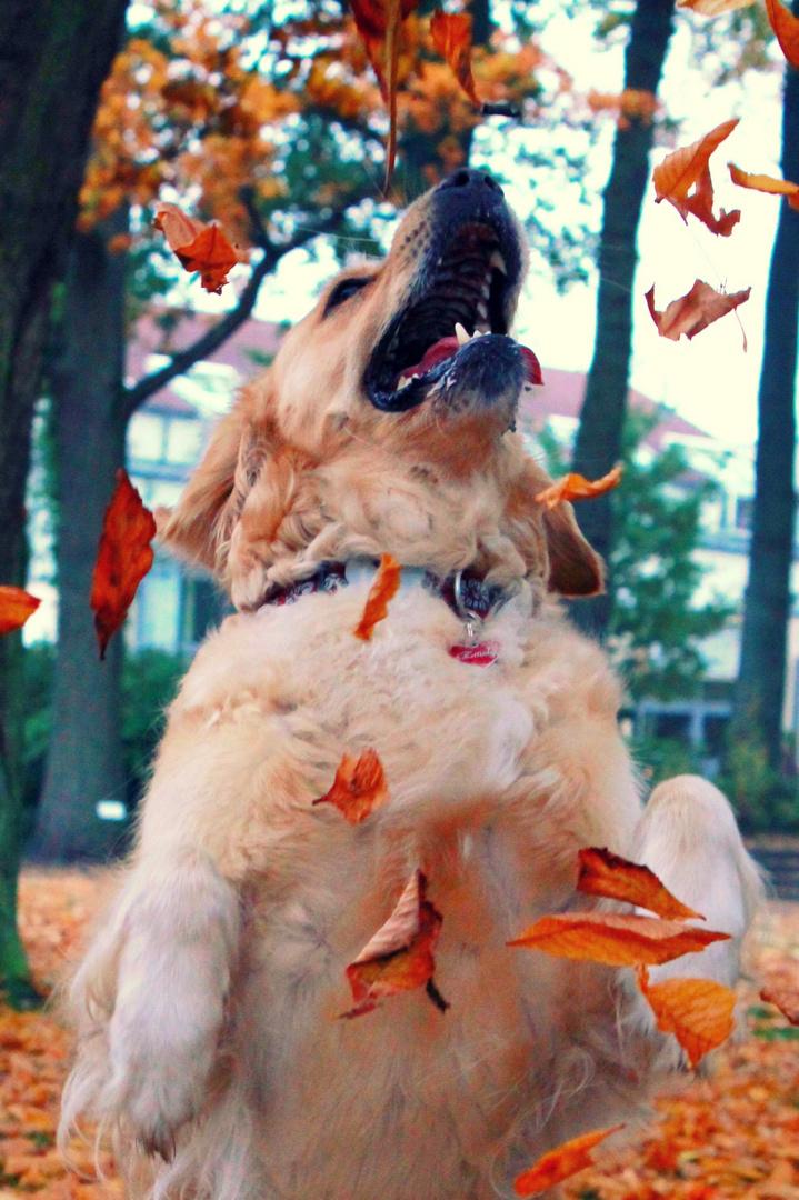 Herbstzeitlosen
