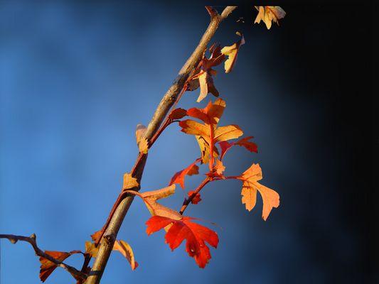 Herbstzweig...