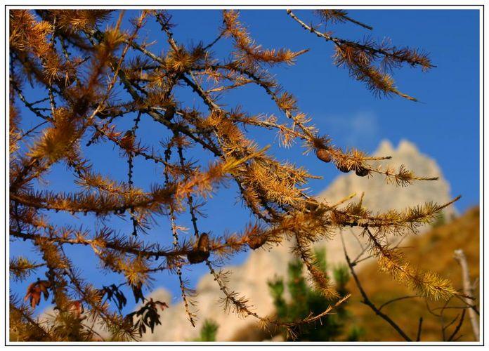 Herbstzweige vor Dolomit