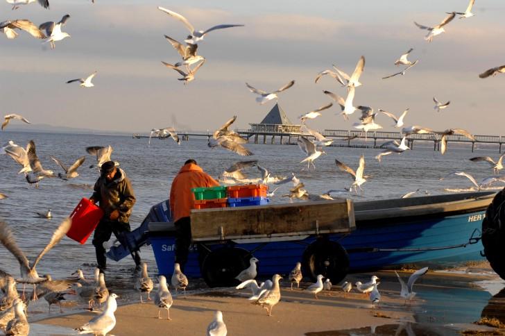 Heringsdorf:Zurück vom Fischfang!
