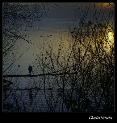 Héron admirant le lever de soleil.