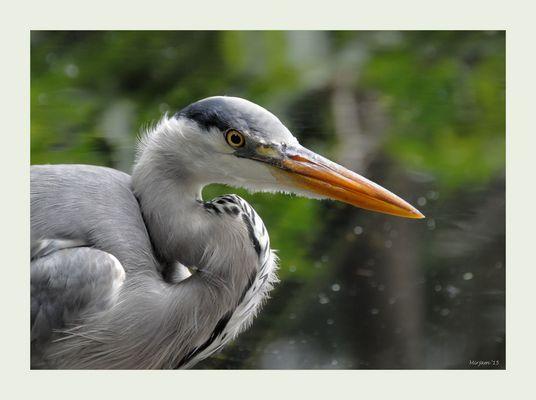 Heron close ..