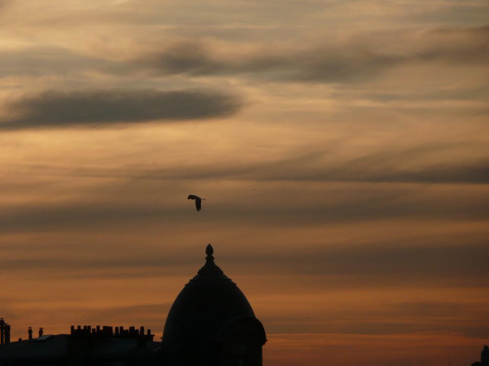 Héron dans le ciel de Paris