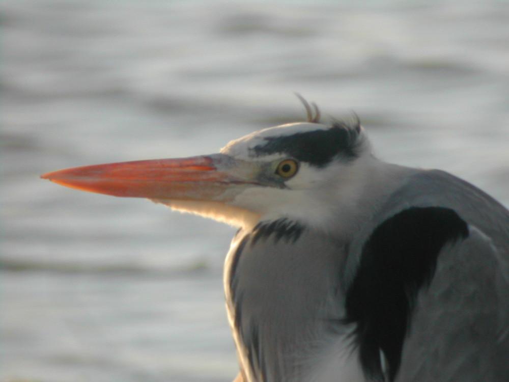 heron profilé