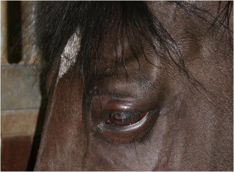 Herpes Virus im Auge Foto & Bild | tiere, haustiere