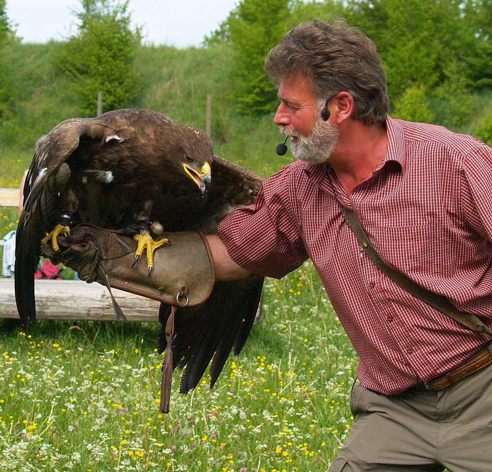 Herr der Greifvögel