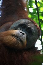 Herr des Dschungels 2