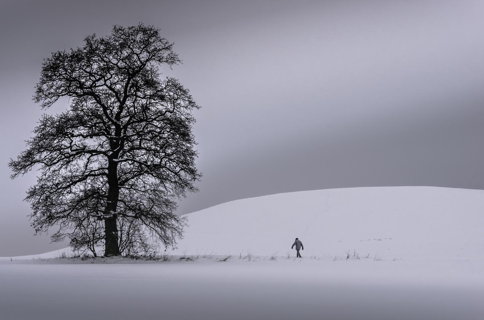Herr Smillas Gespür für Schnee