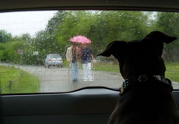 Herrchen im Regen
