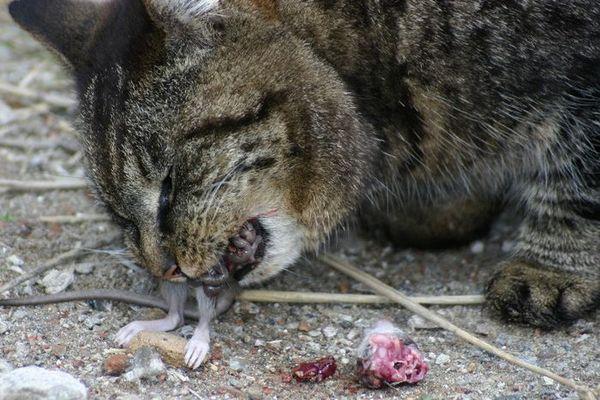Herrlich die Mäuse!!