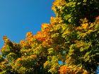 Herrlicher Herbsttag.....