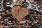 Herz aus Holz...