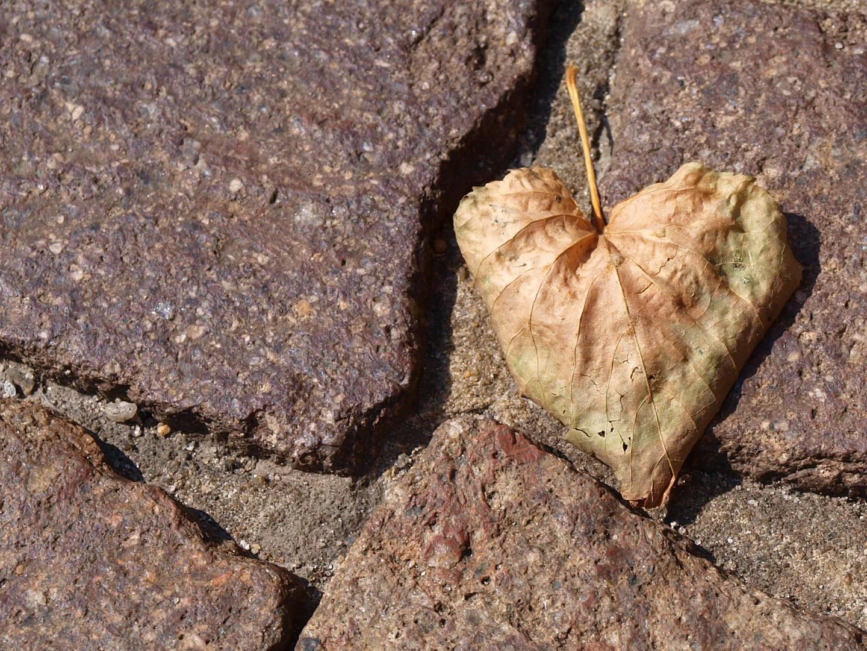 Herz im Herbst