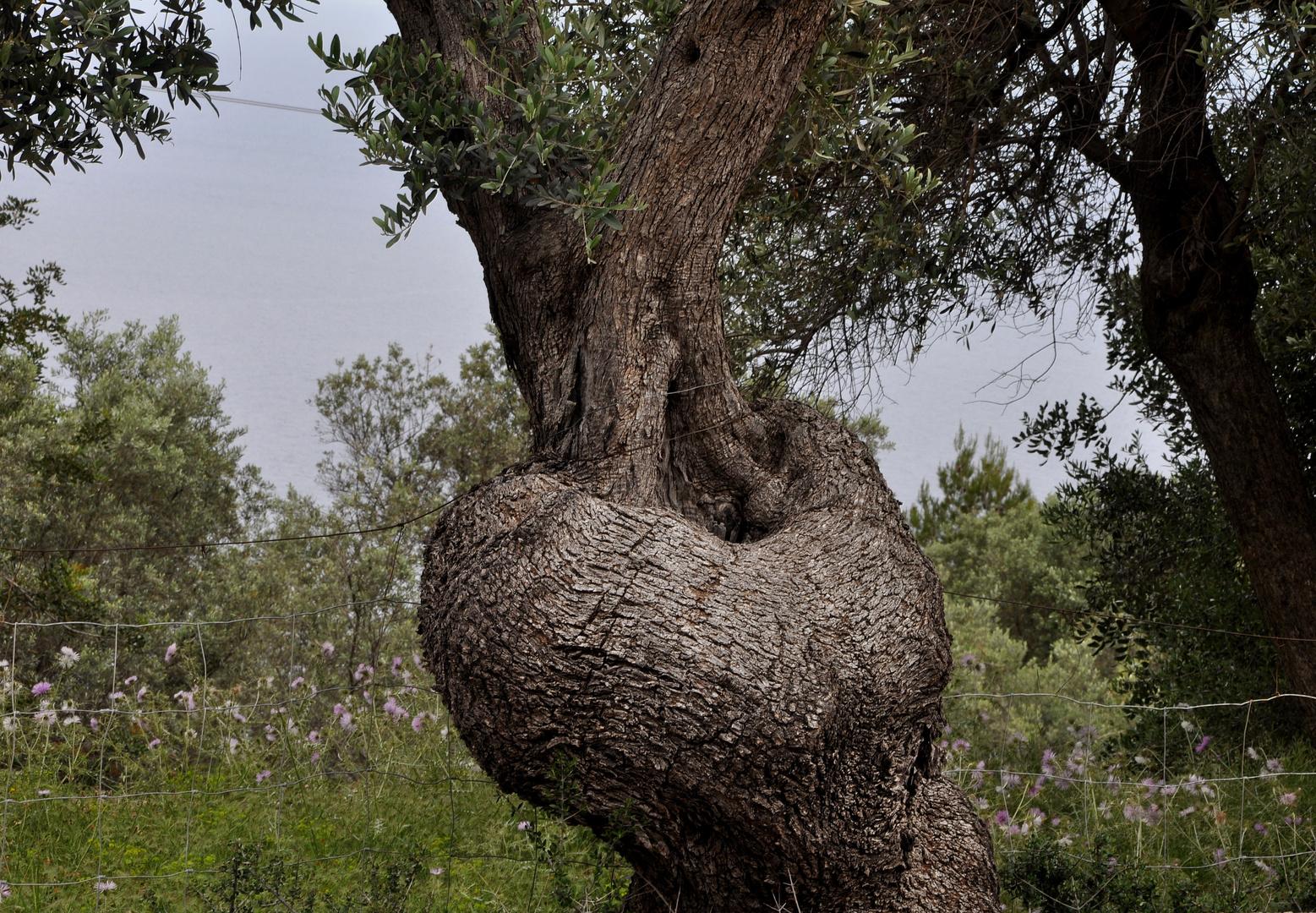Herz-lichst euer Oli..venbaum