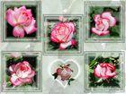 Herz mit Rosen............oder Rosen mit Herz......